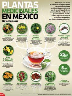 Éstas son algunas plantas medicinales con grandes propiedades localizadas en el Noreste del país. #Infographic