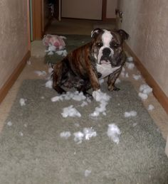 Another plush toy bites the dust... some kind of mystery explosion according to Jazz
