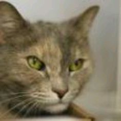 Super Urgent! Manhattan NY.  Lily.  Female.  10 years.  To die in a.m.  See Pets on Death Row- Urgent Death on fb.  ***STILL ALIVE!!  Needs home NOW!*** https://www.facebook.com/PetsOnDeathRow?fref=ts