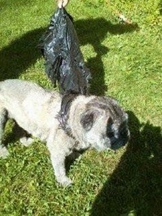 Senior dog discarded from moving car in a trash bag--Thank God for kind samaritans! Praying Teddy will find his forever home soon!