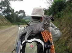 Kitty, the World's Most Adventurous Cat....she travels everywhere with the couple...they are on the way to Columbia right now....
