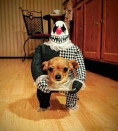The best dog costume I have ever seen