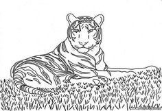 Tiger coloring page. This Tiger coloring page is available for free in JUNGLE ANIMALS coloring pages. You can print it out or color online This Tiger . Bible Coloring Pages, Online Coloring Pages, Disney Coloring Pages, Animal Coloring Pages, Adult Coloring Pages, Cute Tiger Cubs, Cute Tigers, Elephant Coloring Page, Cat Coloring Page