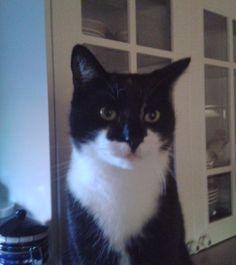 Dierenweetjes: Kies jij een kat of kiest de kat jou als baas