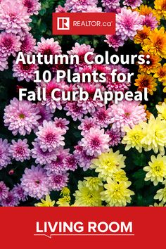 Are you considering selling your home this fall? 🍂  Or maybe you're looking for ways to extend the beauty of your summer garden?   Create colourful curb appeal and make your property pop with these 10 fall-flowering plants. 🌼🌻🌺  The colours are in full bloom on REALTOR.ca Living Room.  #fallflowers #fallhomedecor #realestate #homeimprovement #REALTORdotca Outdoor Flowers, Summer Garden, Fall Flowers, Garden Club, Bloom, Fall Curb Appeal, Plants, Planting Flowers, Fall Plants