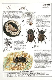 Chart Infographic, Insects, Vintage World Maps, National Parks, Sketchbooks, Animals, Garden, Draw, Language
