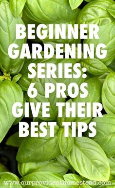 you new to gardening? Our beginner gardening series will help answer your questions, including tips and advice from the pros.Are you new to gardening? Our beginner gardening series will help answer your questions, including tips and advice from the pros. Gardening For Beginners, Gardening Tips, Container Gardening, Sun Loving Plants, Bush Beans, Hardy Plants, Garden Pests, Garden Insects, Planting Seeds