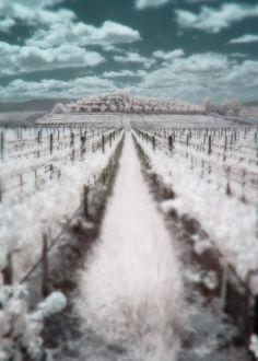Doffo Winery, Temecula, CA