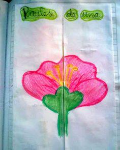 Proyecto escolar sencillo sobre la flor y sus partes.