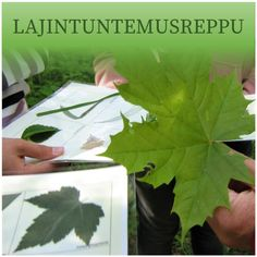 Lajintuntemusreppu | MAPPA.fi Closer To Nature, First Grade, Picture Video, Barn, Teacher, Plants, Opi, Converted Barn, Professor