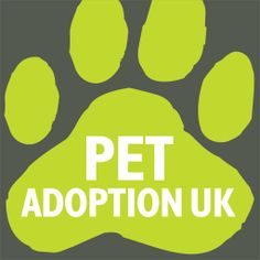 Pet Adoption UK - Dogs, Cats, Rabbits and other animals available for adoption and rehoming from UK animal charities. Rabbit Adoption, News Blog, Guinea Pigs, About Uk, Charity, Terrier, Pets, Animals, Animais
