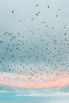 murray mitchell: birds flying in the twilight Ciel Pastel, Pastel Sky, Pink Sky, Pastel Colours, Pink Blue, Labo Photo, Le Vent Se Leve, Pretty Pictures, Beautiful World