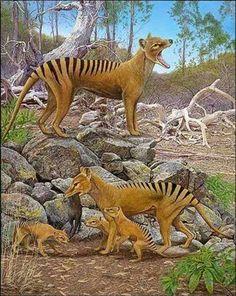 Thylacine - Tell Hicks