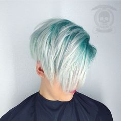 Colorful Pixie Bob