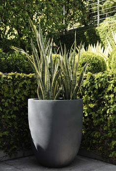 Duralite Tall Egg, perfect for stunning specimen planting, use alone, as part of a composition or in a series of three. Garden Planters, Planter Pots, Container Gardening, Planting, Composition, Eggs, Green, Outdoor, Outdoors