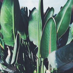 neverending #summertime - it's an addiction / #palms #tropical #jungle…