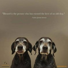 Blessed Is The Person Who Has Earned The Love Of An Old Dog #olddogsneedlovetoo #loveseniors #sweetpups