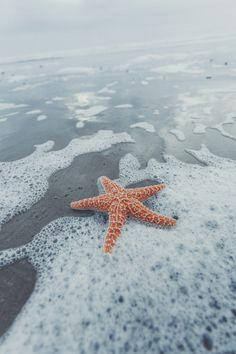 Starfish in the ocean Cute Backgrounds, Aesthetic Backgrounds, Aesthetic Wallpapers, Cute Wallpapers, Wallpaper Backgrounds, Tumblr Wallpaper, I Wallpaper, Beach Aesthetic, Am Meer