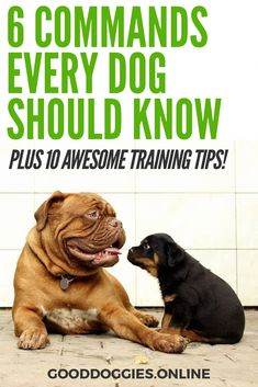 or that will make you both happier. Plus 10 awesome training tips. Here are 6 commands to teach your dog that will make you both happier. Each of these commands are basic and something each dog should know. 6 dog training commands to teach your Positive Dog Training, Training Your Puppy, Dog Training Tips, Potty Training, Training Classes, Leash Training, Training Schedule, Training Collar, Training Quotes