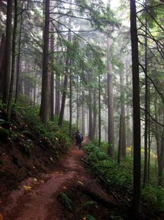 Forest Park, Portland, Oregon. Where I'd go for walks looking for Bigfoot.....