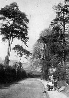 Port Hill circa 1890. Shrewsbury, Shropshire. Shrewsbury Shropshire, Old Photographs, Photos, Old Buildings, Family History, Old Town, Beautiful Places, Lost, Victorian