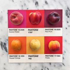Pantone to chyba ulubiona paleta barwna ostatnich czasów.Były już koktajle w kolorach Pantone, teraz przyszedł czas na owoce, warzywa i tarty. Trend ten ogarnął w szczególności Instagram, a zdjęcia zarówno owoców jak i słodyczy w kolorach Pantone może znaleźć na profilu lucialitman. Tworzone są takż