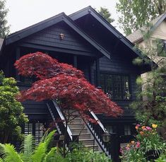 Black house in contrast with the Acer looks awesome. Would be very nice with a golden acer too. Maple trees, Japanese, fern