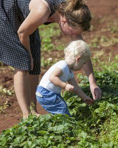 Огород для малыша.  Для многих из нас работа на огороде – не просто удовольствие, мы трудимся для того, чтобы обеспечить своих родных свежими овощами и фруктами, порадовать детей ягодами. И они, наши дети, внуки, стремясь подражать нам, тоже хотят участвовать в процессе выращивания овощных культур. И чтобы не отбить у них охоту быть участниками этого увлекательного процесса, психологи рекомендуют выделить на дачном участке специальную детскую грядку. Как это правильно сделать? Давайте…