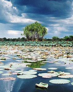 Boat ride across Wetlands Kakadu National Park Northern Territory Australia. Kakadu National Park, National Parks, Australia Living, Australia Travel, Tasmania, Wonderful Places, Beautiful Places, Outback Australia, Landscape Photography