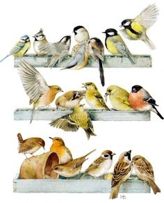 chickadees, sparrows and friends by Marjolein Bastin