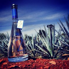 Blanco Tequila 29 Two Nine with background of agaves in Arandas, Jalisco, México.