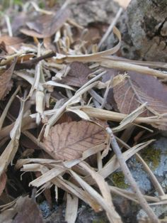 National Geographic Your Shot Forest Floor, National Geographic Photos, Wooden Walls, Amazing Photography, Mini, Ideas, Wood Walls, Thoughts