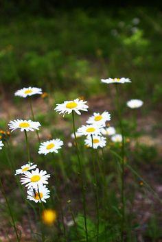 Wild Flowers, ©Misty Exnicios
