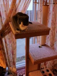 Cat lounging in front of the scratching post on the Cat Power Tower cat tower