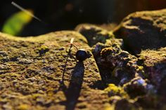 Herbstrückblick mit Sonnenschein