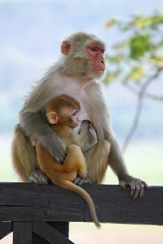 Baby monkey one more time..