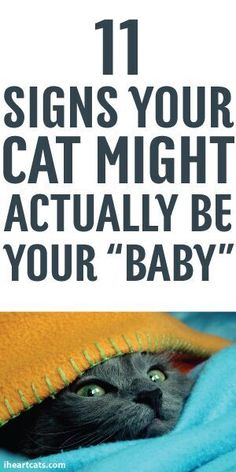 "11 Signs Your Cat Might Actually Be Your ""Baby"""