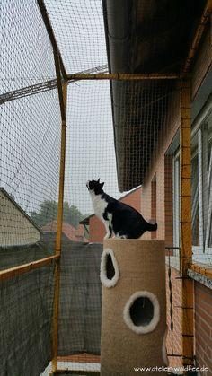 Atelier Waldfee, Balkon, katzensicher, Katze,