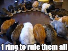 Can you even own that many cats