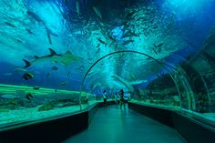 Manila Ocean Park is the first world-class marine theme park in the Philippines. It is an integrated urban resort with marine life attractions and an aqua-themed hotel.