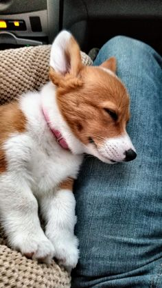 Acquire fantastic tips on corgi. They are on call for you on our internet site. Cute Corgi, Corgi Dog, Pet Dogs, Weiner Dogs, Pembroke Welsh Corgi Puppies, Cute Baby Animals, Animals And Pets, Funny Animals, Cute Animal Pictures