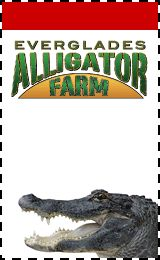 Everglades Alligator Farm - Try the air boat tour around the Everglades! Or walk around and look for the alligator wrestling show