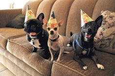 20.) Ain't no party like a small dog party.