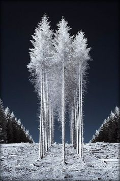 Trees   Flickr - Photo Sharing!