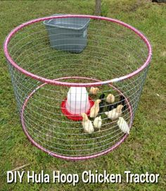 DIY Hula Hoop Chicken Tractor - perfect for the baby chicks... #chickens #homestead #homesteading