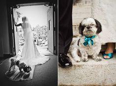 Dogs atWeddings - Maria Vicencio Photography - The Blog
