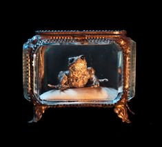Antique French Ormolu Casket/Beveled Glass/Real FROG/Curiosity Cabinet/Fairy Tale Curio/Taxidermy/Exquisite Display/Trinket Box on Etsy, $266.09
