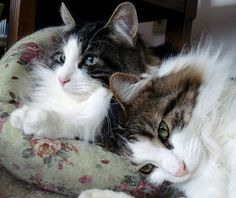 Two of my handsome boys...Spike and Charlie <3