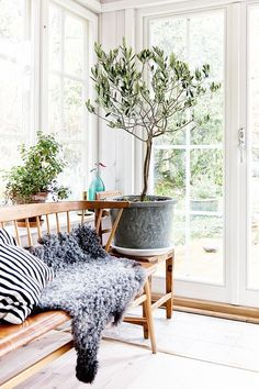 What a beautiful area for a sun room. Love the large pot and plant placed off around. A cosy sheepskin mat for the cooler days.