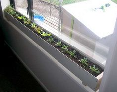 lettuce growing in a gutter on the inside window ledge. This would be great to do if I didn't have 2 cats that liked to mess get in the windows or messed with stuff.